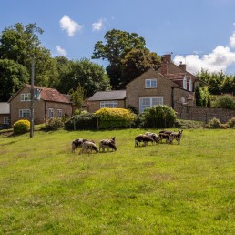 Holiday cottages on a farm Dorset | Patson Hill